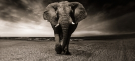 #339- Journey of Attachment: Avoiding the Elephant in the Room